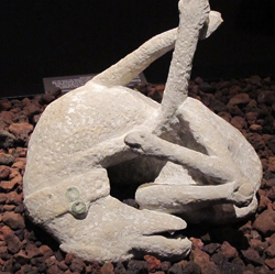 <b>Plaster cast of a dog from Pompeii</b>